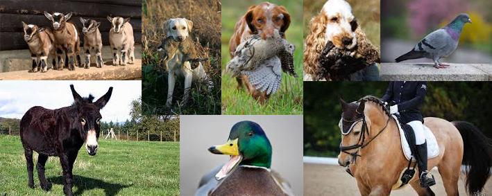 Salon chasse et nature beauvais oise affipub communication for Salon animaux 2017